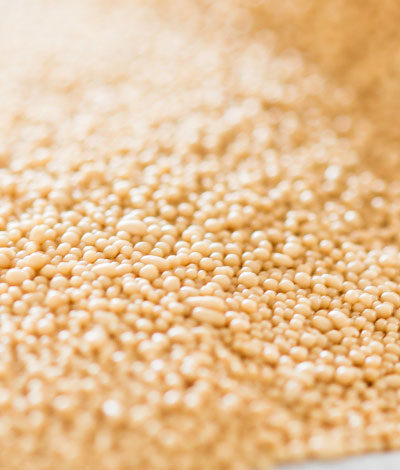 Learn The Secret to Longer Lasting Yeast